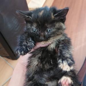 【子猫一匹緊急保護しました!】