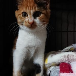 【11/14 保護された子猫の名前が決まりました!あつこちゃん】