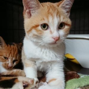 【11/18 保護の子猫の名前が決まりました!勝治君】