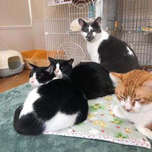 【猫と幸せに暮らそう・おはなし会を開催します!】
