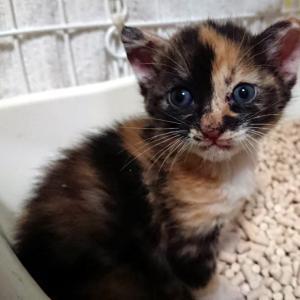 【 コナミちゃんも大好きなロイヤルカナンの仔猫用フードご支援をお願いいたします 】