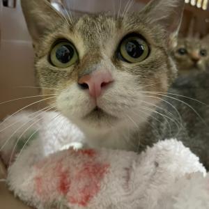 【 母猫と仔猫一匹保護しました!】