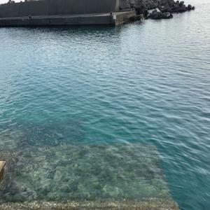 生物採集  そして、すさみの海