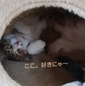 猫には関係にゃい