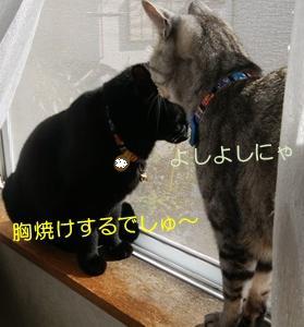 お土産オヤツ_18