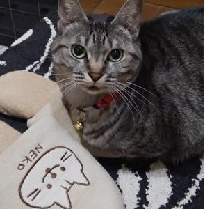 生活習慣猫(びょう)