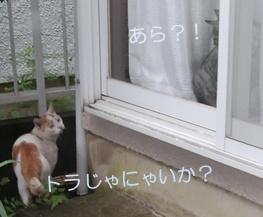 夫婦の会話(=^・^=)