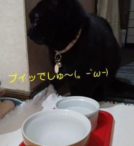 甘えんぼジプシー(*≧ω≦)