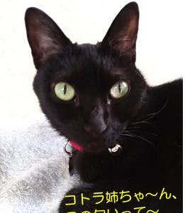 開花レポ2021~金銀木犀編~