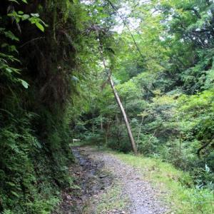 志駒線のラスボス隧道~志駒線4号隧道(仮称)