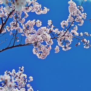 空は晴れ、花は咲き。顔を上げて、そして、元気に、