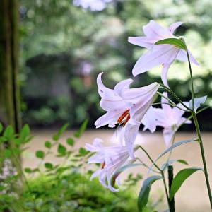 その花は空気をやさしくしていました。そんな存在に