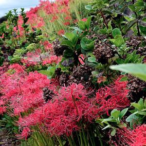 季節を超えても、旬の赤花と並び立つ