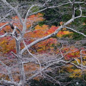 きれいな紅葉も強い枝があってこそ。