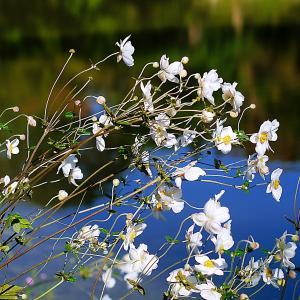 季節を告げる花に、あなたは