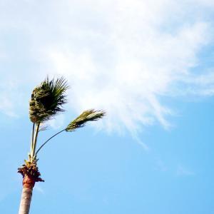 風強けれど青空に