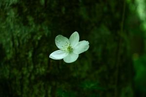 花シリーズです!