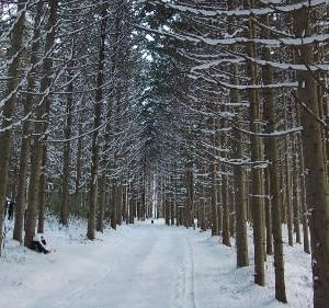 冬が始まるね