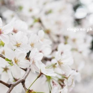 【春休み】習い事のない日々。意外にも心地よさを感じています。