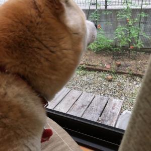 落ち着かない犬と明け方の雨とありのままの私