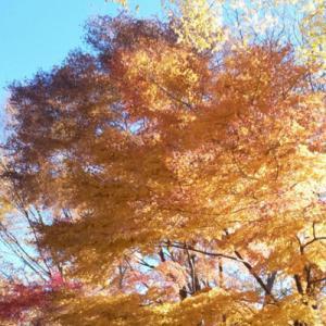 箱根へ秋旅②