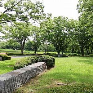 国営昭和記念公園のあじさい ♪