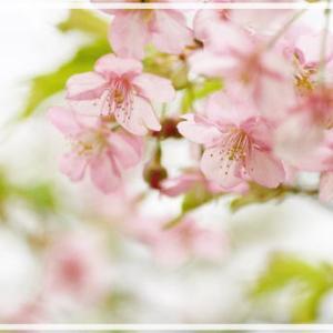 河津桜 ~マクロレンズを買いました~