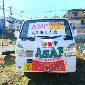 アジアの子供たちの就学を支援するASAPさんの畑で京芋掘り、お土産に樹までもらっちゃった♪