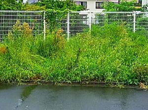 雨天決行、八王子市山田町町内清掃で空地の草むしり