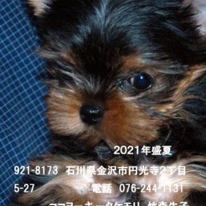 暑中お見舞い申し上げます 金沢市 暑い(^_-)-☆