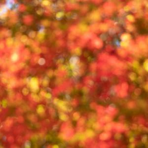 私の〇〇な秋を探して。フォトコミュ写真道場!