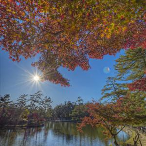 奈良公園紅葉散歩 其の11