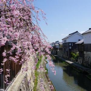 桜ツーリング Ⅱ (八幡堀 彦根城 相川)