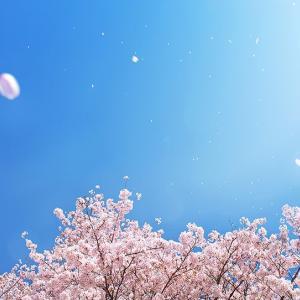 桜 〜追記〜