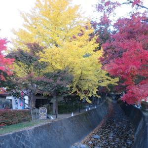 富士山の紅葉