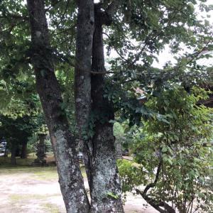 この木 何の木