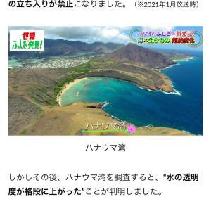 ハワイの海の浄化