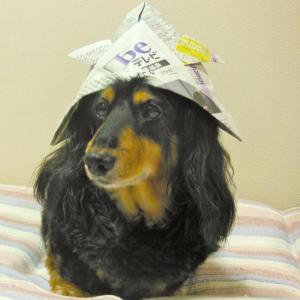 【ハロウィン特別企画】お犬様 珠玉のコスプレ集