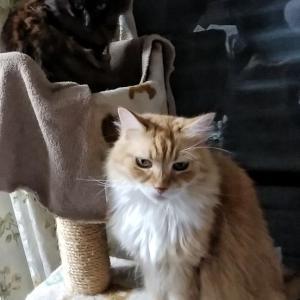 大猫小猫 茅野の反撃