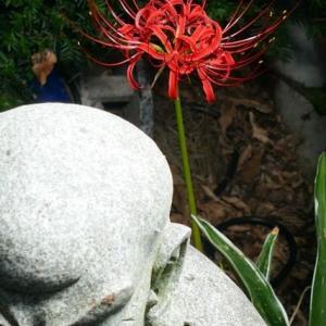 常楽寺の彼岸花が咲き始めていました 2019年9月22日