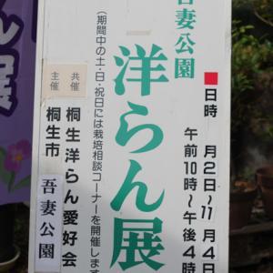 2019年秋の //洋らん展// 桐生吾妻公園