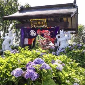 //紫陽花いい感じに咲いていました// 群馬県みどり市 松源寺 2021年