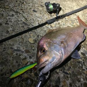 【YouTube】シーバス釣りをしていたら赤い魚が、、、