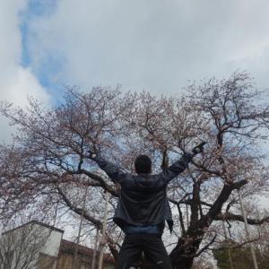 金沢観桜買い物ラン キタノカオリのち残念続き編