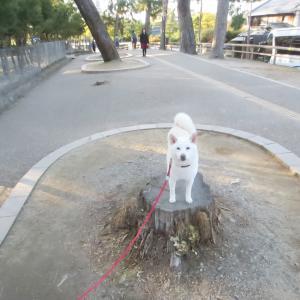 久々の「ごろたろう犬具」へ