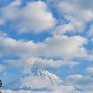 【旅】富士山の青木ケ原樹海へ