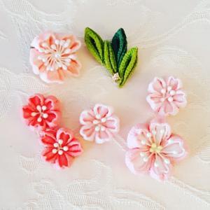 桜の花びら1輪
