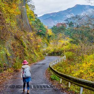 【初心者におすすめ!東京近郊・日帰り登山10選】電車・バスで行ける山