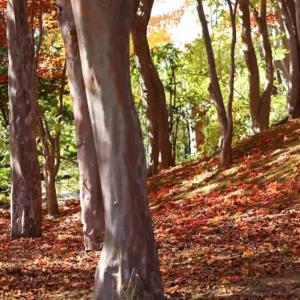 ようやく秋散歩再開