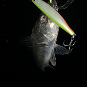 釣れる釣れないの差。